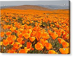 The Poppy Fields - Antelope Valley Acrylic Print by Peter Tellone