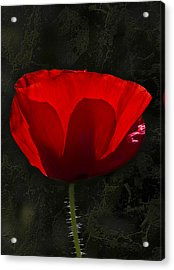 The Poppy Acrylic Print by Svetlana Sewell