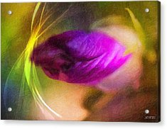 The Power Of Dreams Acrylic Print by Nicole Frischlich