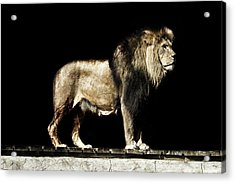 The Powerful Acrylic Print by Martin Newman