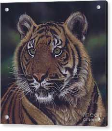 The Prince Of The Jungle Acrylic Print