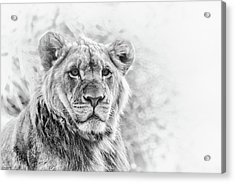The Prince Acrylic Print