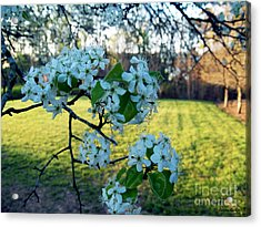 The Promise Of Spring 1c Acrylic Print