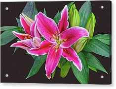 The Pulchritude Of Lady Lily Acrylic Print