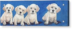 The Pups 1 Acrylic Print by Roger Wedegis