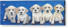 The Pups 2 Acrylic Print by Roger Wedegis