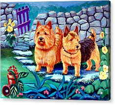 The Purple Gate - Norwich Terrier Acrylic Print by Lyn Cook