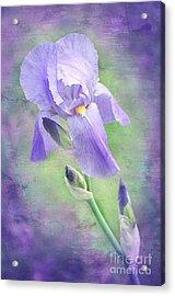 The Purple Iris Acrylic Print by Andee Design