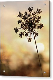 Acrylic Print featuring the photograph The Queen At Sunrise by Lori Deiter