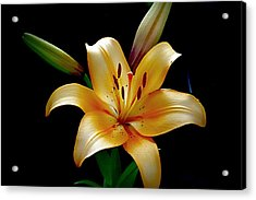 The Queen Lily Acrylic Print