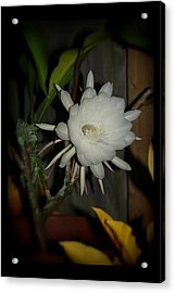 The Queen Of The Night Acrylic Print by Mandy Shupp