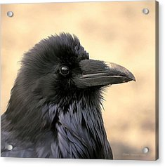 The Raven Acrylic Print by Clare VanderVeen
