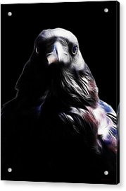 The Raven In My Dreams Acrylic Print by Wingsdomain Art and Photography