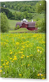 Acrylic Print featuring the photograph The Red Barn And Dandelions by Paula Porterfield-Izzo