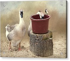 Acrylic Print featuring the photograph The Red Bucket by Robin-Lee Vieira