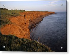 The Red Cliffs Of Prince Edward Island Acrylic Print by Taylor S. Kennedy