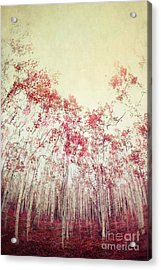 The Red Forest Acrylic Print by Priska Wettstein