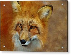 The Red Fox 658-painted Acrylic Print by Ericamaxine Price
