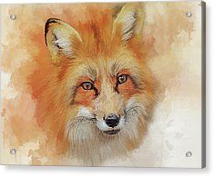 The Red Fox Acrylic Print