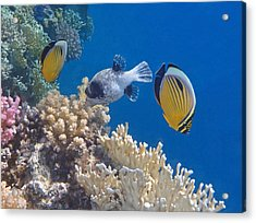 The Red Sea Underwater World Acrylic Print