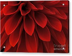 The Reddest Red Acrylic Print