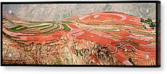 The Redlands, Yunnan, China Acrylic Print