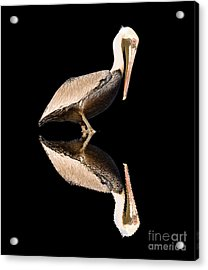 The Reflection Of A Pelican Acrylic Print