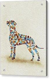 The Rhodesian Ridgeback Dog Watercolor Painting / Typographic Art Acrylic Print