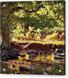 The River Lin , Bradgate Park Acrylic Print
