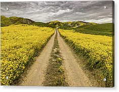 Acrylic Print featuring the photograph The Road Less Pollenated by Peter Tellone