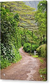 The Road Less Traveled-waipio Valley Hawaii Acrylic Print