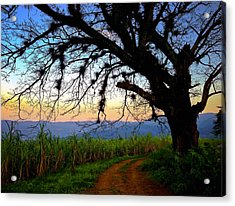 The Road Less Traveled Acrylic Print by Skip Hunt
