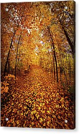 The Road Never Traveled Acrylic Print by Phil Koch