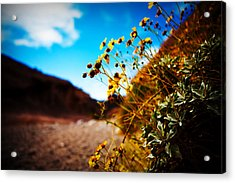 Acrylic Print featuring the photograph The Road To Awe by Ryan Smith