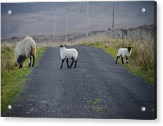 The Roads In Ireland Acrylic Print by Bill Cannon