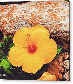 Hybiscus Acrylic Print