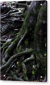The Root Acrylic Print by Pramod Bansode
