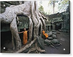 The Roots Of A Strangler Fig Creep Acrylic Print by Paul Chesley