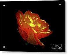 The Rose 3 Acrylic Print