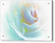 The Rose By Scott Cameron Acrylic Print