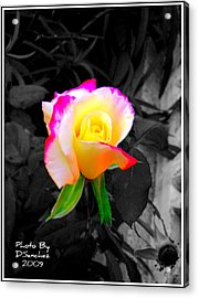 The Rose Acrylic Print by Doug Sanchez