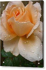 The Rose Acrylic Print by Kimberly Morin