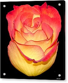 The Rose Acrylic Print by Rick Friedle
