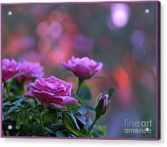 Acrylic Print featuring the photograph The Roses by Lance Sheridan-Peel