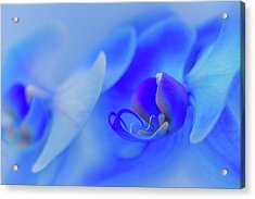 The Scent Of Blue Mystique Acrylic Print