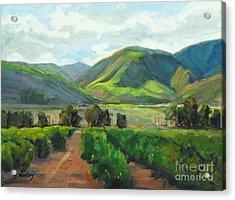 The Scent Of Citrus - Santa Paula Citrus Grove Central Coast Landscape Acrylic Print by Karen Winters