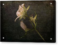 Acrylic Print featuring the photograph The Scent Of Jasmines by Randi Grace Nilsberg
