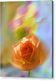 Acrylic Print featuring the photograph The Scent Of Roses by Vladimir Kholostykh