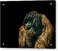The Sceptic Acrylic Print by Paul Neville