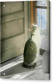 The Screen Door Cat Acrylic Print by Diana Angstadt